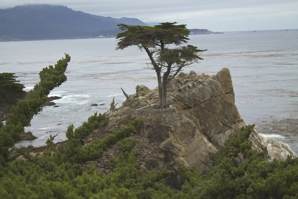 Lone_Cypress